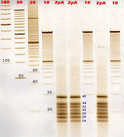 small fragments, DNA-Buffer Disc